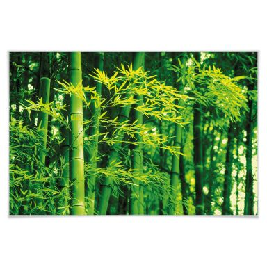 Giant Art® XXL-Poster Bamboo in Spring - 175x115 cm