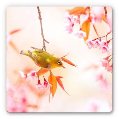 Glasbild Vogelgezwitscher in der Kirschblüte - quadratisch