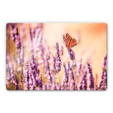 Glasbild  Colombo - Der Schmetterling im Lavendel