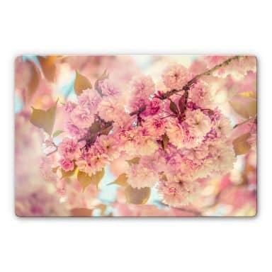 Glasbild Delgado - Kirschblüten
