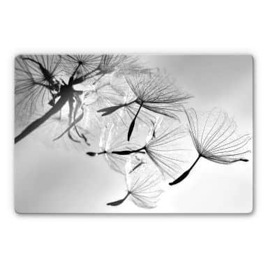 Glass Picture Delgado - Dandelion Freedom