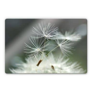 Glass Picture Delgado - Dandelions diversity