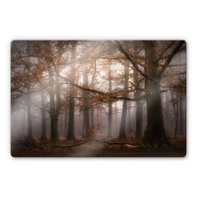 Stampa su vetro Dingemans - Nebbia nella foresta autunnale