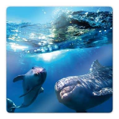 Dolphins Underwater Glass art