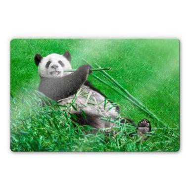 Glasbild Ben Heine - Glücklicher Panda