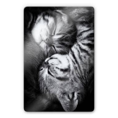 Glasbild Jancova - Sweet Kitten