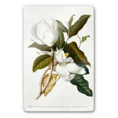 Glasbild Ehret - Magnolie