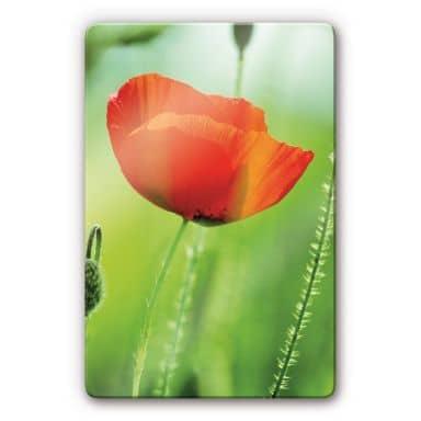 Poppy Glass art