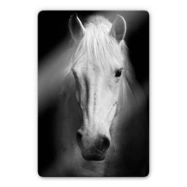 Glasbild White Horse