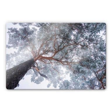 Glasbild Krivec - Baum im Winter