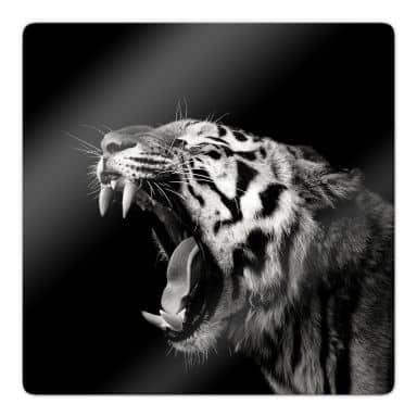 Glasbild Meermann - Der Tiger - quadratisch