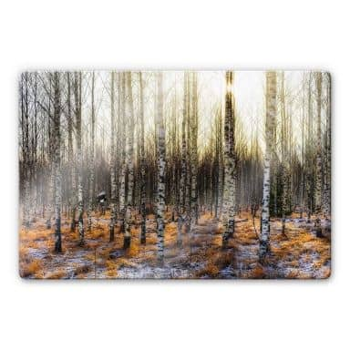 Glasbild Olsen - Sonnenschein im Birkenwald