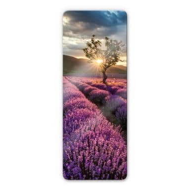 Lavender in the Provence 02 Glass art - panorama
