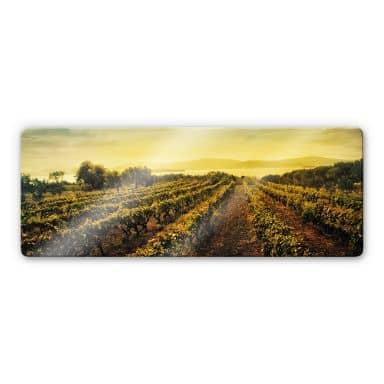 Glasbild Weinreben im Sonnenuntergang - Panorama