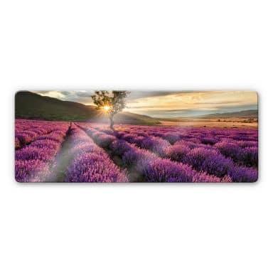 Glasbild Lavendelblüte in der Provence - Panorama1