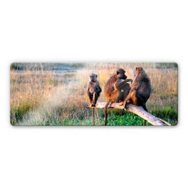 Glasbild Affenbande - Panorama