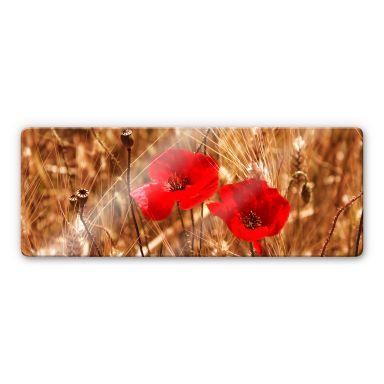 Glasbild Mohnblüten im Feld - Panorama
