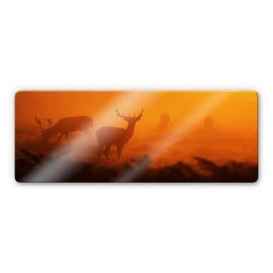 Glasbild Hirsche im Sonnenuntergang - Panorama