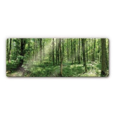 Forest Panorama 1 Glass art
