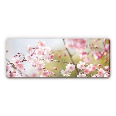 Cherry Blossoms Panorama Glass art