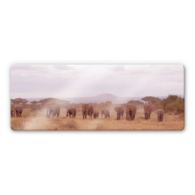 Glasbild Elefantenherde - Panorama