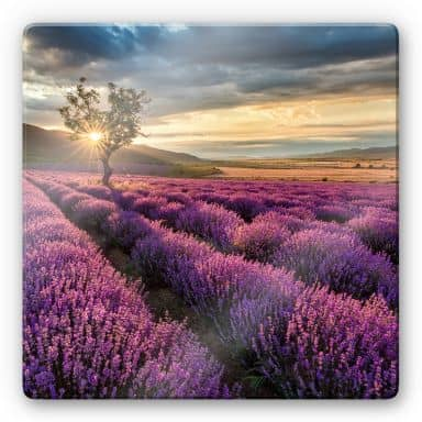 Lavender Flowers in Provence - Square Glass art