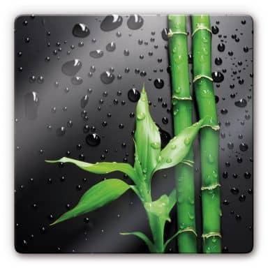 Glasbild Bamboo Over Black - quadratisch