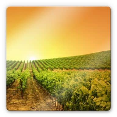 Glass Print Vineyard Sunset