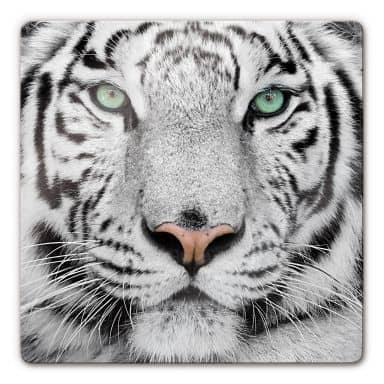 Gorgeous Sumatran Tiger Glass art