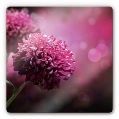 Glasbild Pink Dahlia