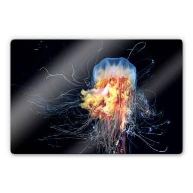 Glasbild Semenov - Amazing Jellyfish