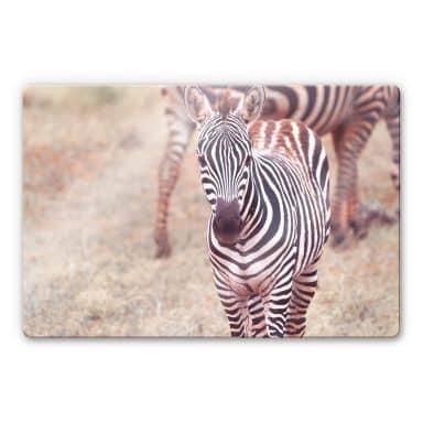 Zebra Foal Glass art