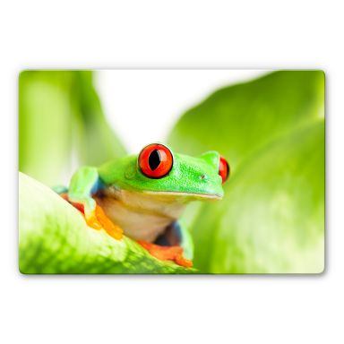 Red-eyed Tree Frog Glass art