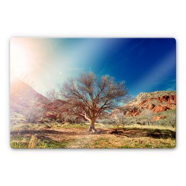 Glasbild Wüstenbaum