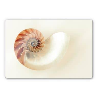 Glasbild Nautilus