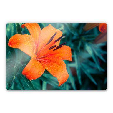 Glasbild Tropical Lily