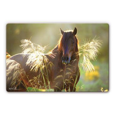 Glasschilderijen Paard uit de serie Boiselle