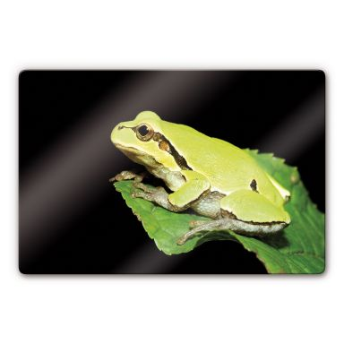 Green Frog Glass art