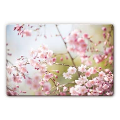Glasbild Cherry Blossoms