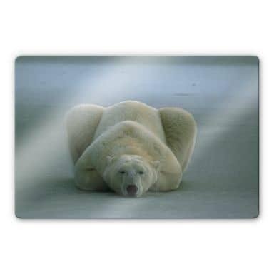 Glasbild NG Eisbär schlafend