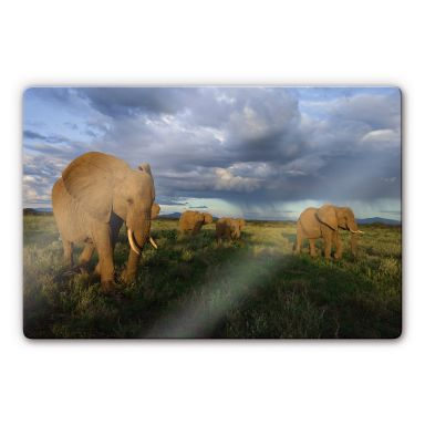 Glasbild NG Elefantenherde