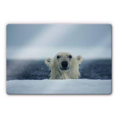 NG Cheeky Polar Bear Glass art