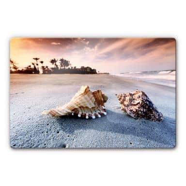 Glasbild Muschelparadies