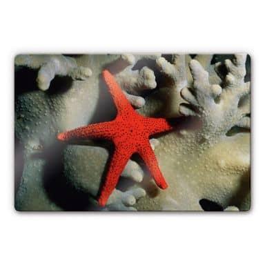 NG Red starfish Glass art