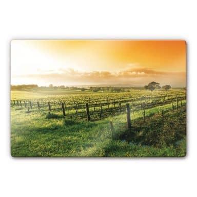 Glasbild Wein im Sonnenuntergang