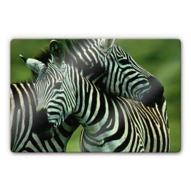 Glasbild NG Zebrapaar