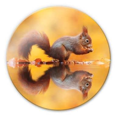 Glasschilderij Rond van Duijn - Eekhoorntje met Noot