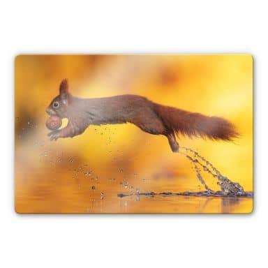 Glasbild van Duijn - Eichhörnchen im Sprung