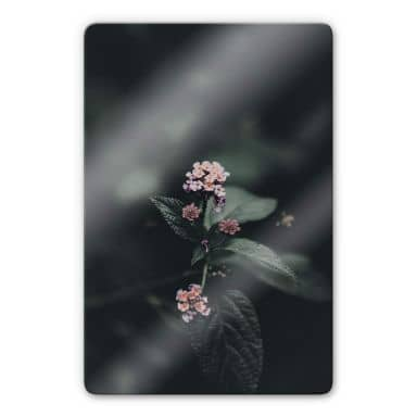 Glasbild Zarte rosa Blüte