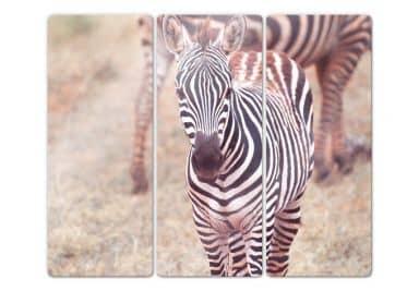 Glasbild Zebra Fohlen (3-teilig)